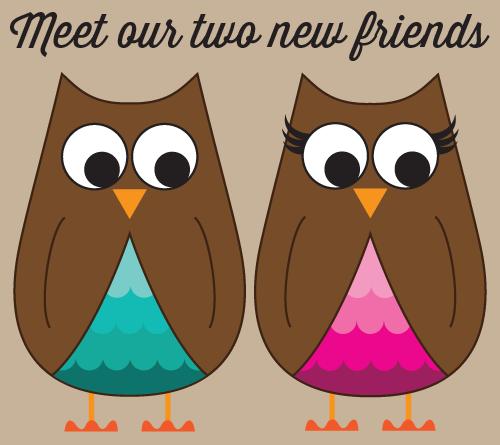 new owl friends